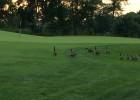 Golf course reviews